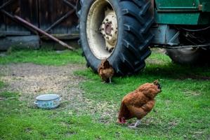 ARiMR do końca maja rozpatrzy wnioski ws. modernizacji rolnictwa