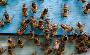 MRiRW: Powstanie zespół doradczy ds. pszczelarstwa