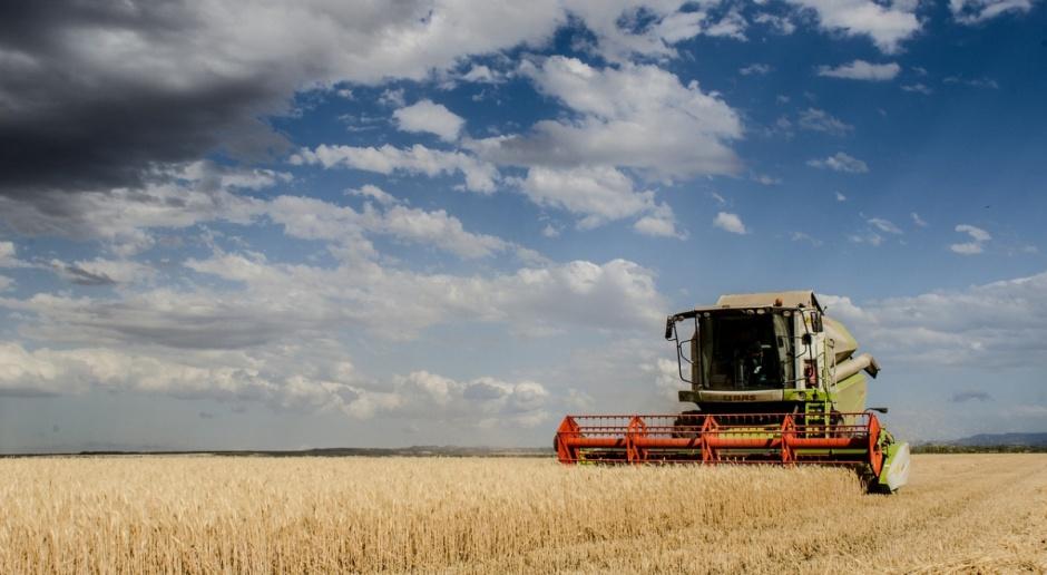 Białoruś: Mniejsze zbiory zbóż w 2016 r.