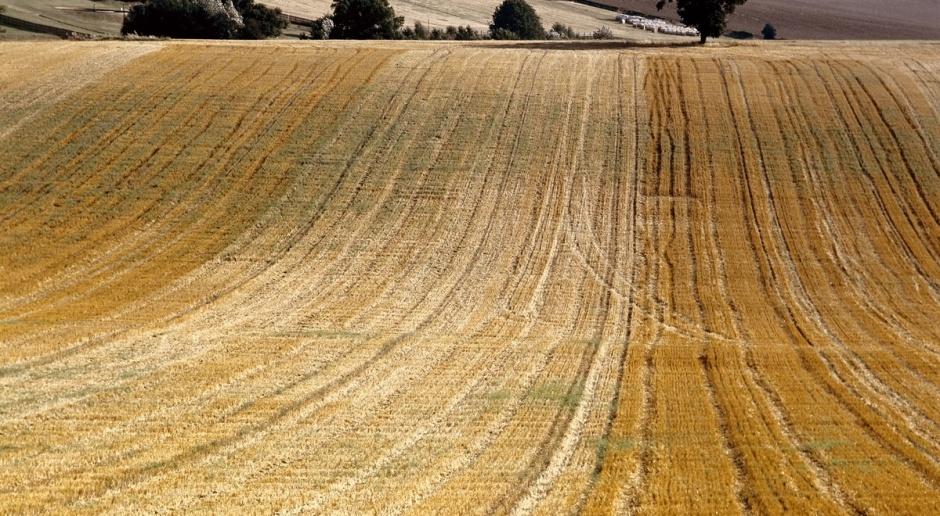 Priorytetem resortu rolnictwa - WPR po 2020 r.