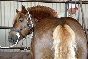 Parlamentarny zespół zajął się targami koni w Skaryszewie