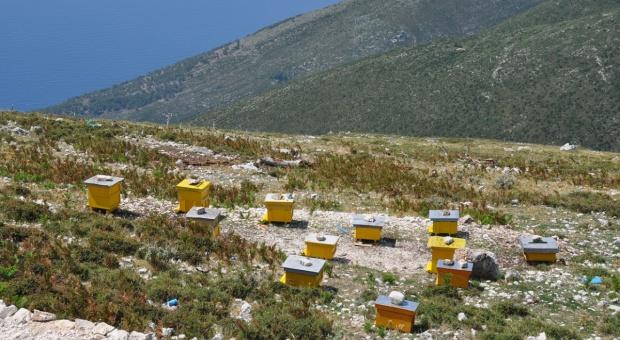 Bułgaria: Prognoza złych lub bardzo złych zbiorów miodu