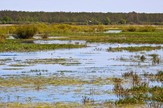 WWF: Ponad połowa obszarów przyrodniczych w UE chroniona tylko na papierze