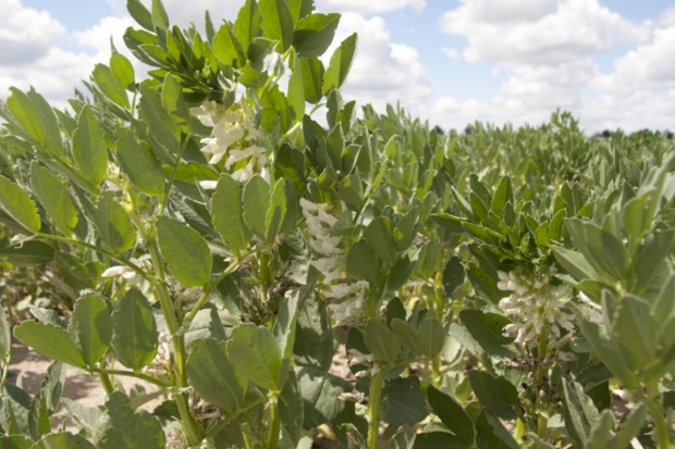 KE rozważa zakaz stosowania pestycydów na obszarach priorytetowych ekologicznie