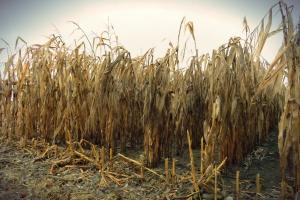 PZU podpisało umowę z MRiRW na sprzedaż dotowanych ubezpieczeń dla rolników