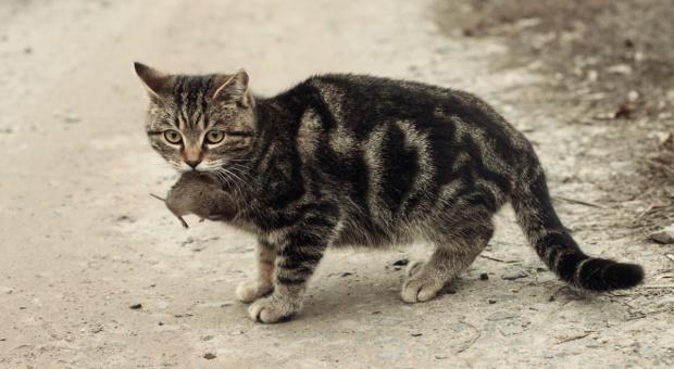 Kot i pies mogą być w budynkach gospodarskich?