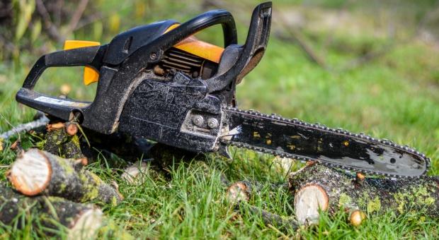 Niemcy: sąd nakazał wstrzymanie wycinki lasu pod budowę fabryki Tesli
