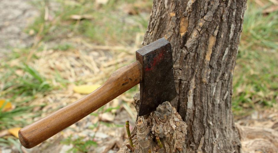 """PO: PiS to """"piła i siekiera"""", która ws. wycinki drzew ma bardzo dużo na sumieniu"""