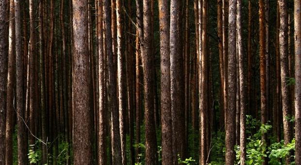 Lasy Państwowe chcą wydać 100 mln zł na wspólne inwestycje z samorządami