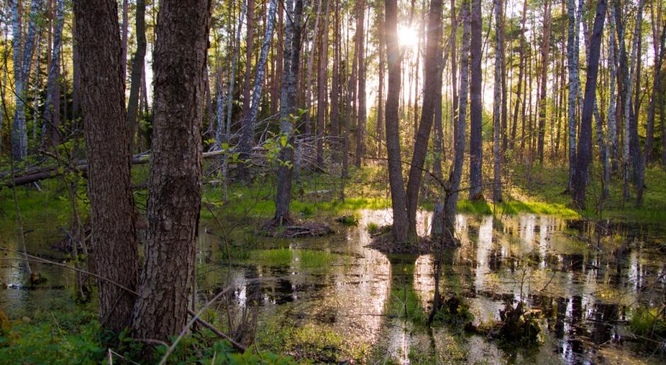 Podlaskie: Wiosenne tegoroczne rozlewiska korzystne dla biebrzańskich bagien