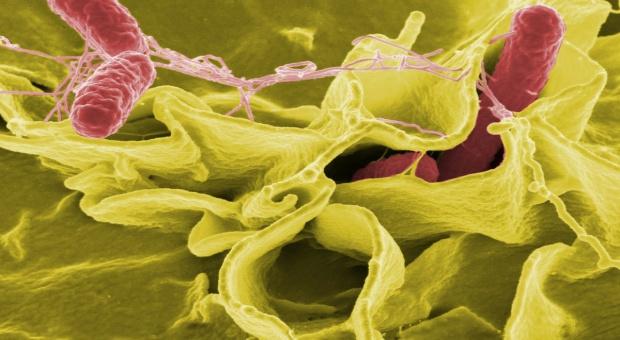 UE: Odporność na antybiotyki jest nadał duża