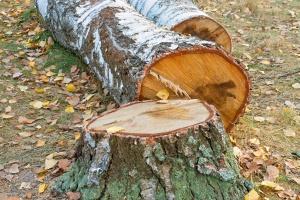 Dlaczego rolnik przy wycince drzew traktowany jest jak prowadzący działalność gospodarczą?