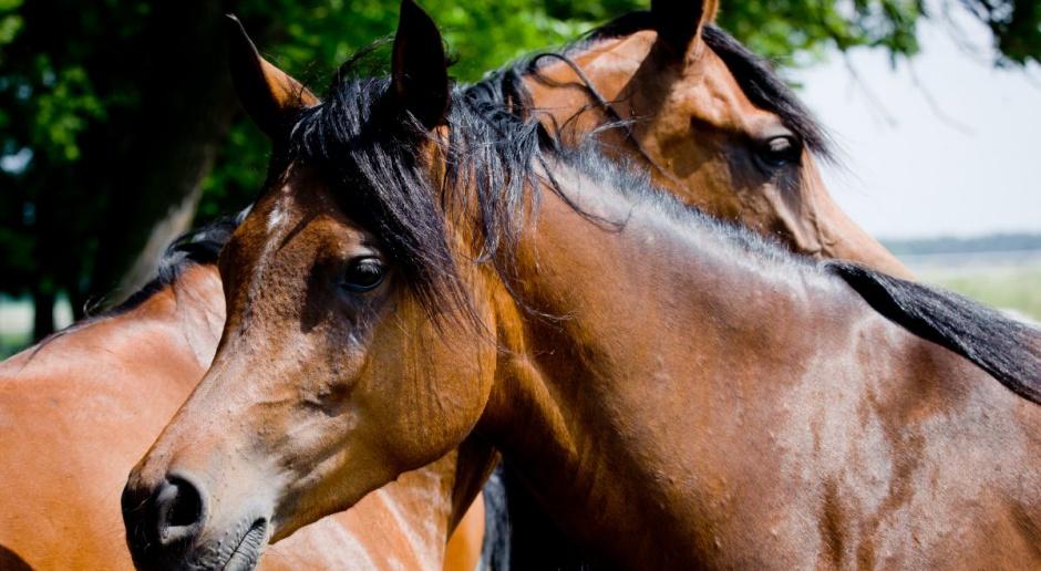 ANR: Podpisano umowę na organizację Święta Konia Arabskiego