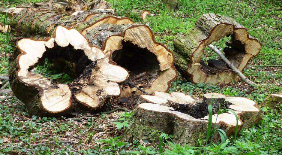 Wycinka drzew będzie doprecyzowana dla właścicieli, ale nie dla rolników