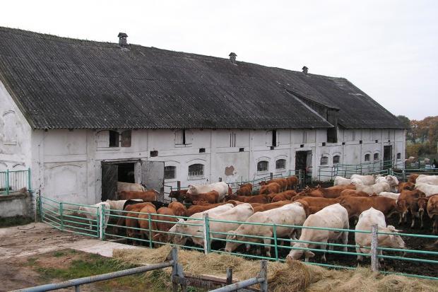 Bilansowanie dawek pokarmowych dla krów mamek