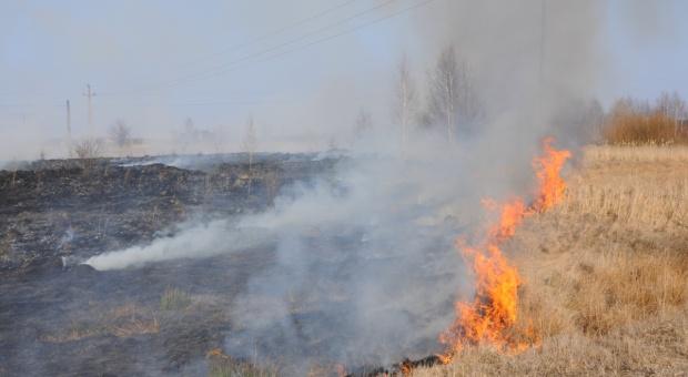 Straż Pożarna: Od piątku do niedzieli ponad 2 600 pożarów traw