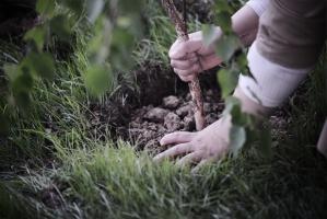 """Nowoczesna: Rusza akcja """"Posadź drzewa"""""""