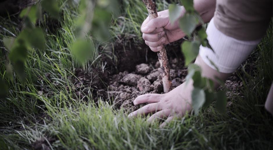 Przebudowa drzewostanu dofinansowana z PROW