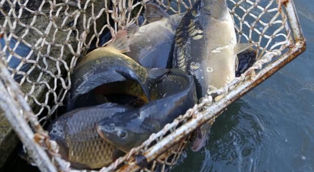 Rząd za zniesieniem możliwości przekazywania kwot połowowych