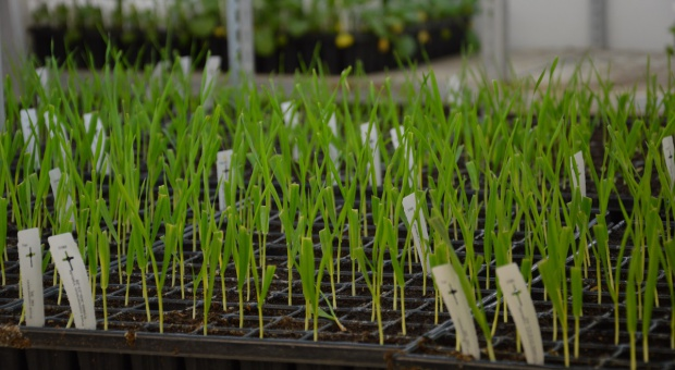 Patentowanie roślin pod lupą Komisji Europejskiej