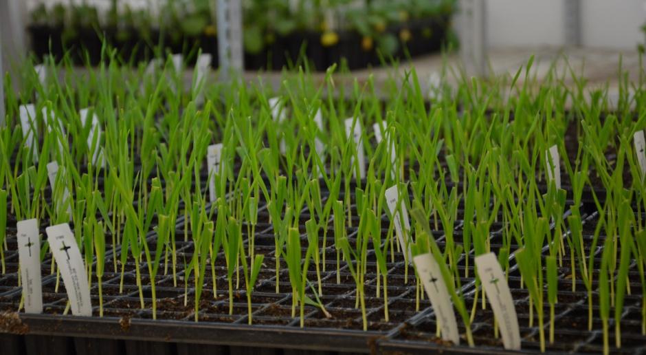 Hodowla roślin antidotum na założenia Zielonego Ładu?