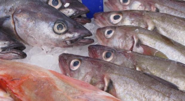 """Rybacy rozpoczęli """"śledziowe żniwa"""" na Zalewie Wiślanym"""