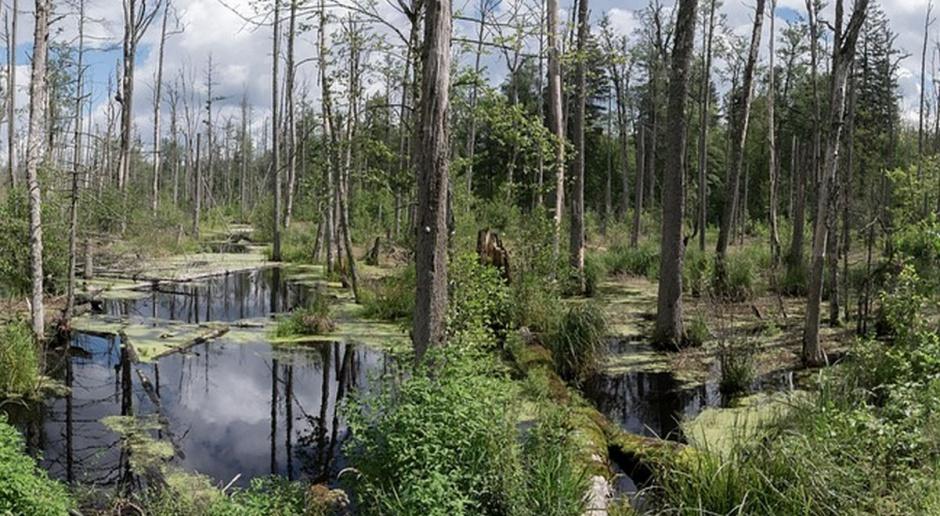 Natura 2000 jednym wielkim nieporozumieniem?