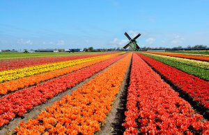 Lepsze nastroje holenderskich rolników i ogrodników