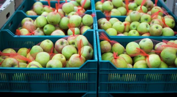 MRiRW: Polska chce sprzedawać w Indiach drób, wieprzowinę i jabłka