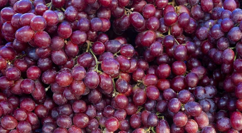 Podkarpackie: Przez tegoroczne mrozy zbiory w winnicach mogą być mniejsze