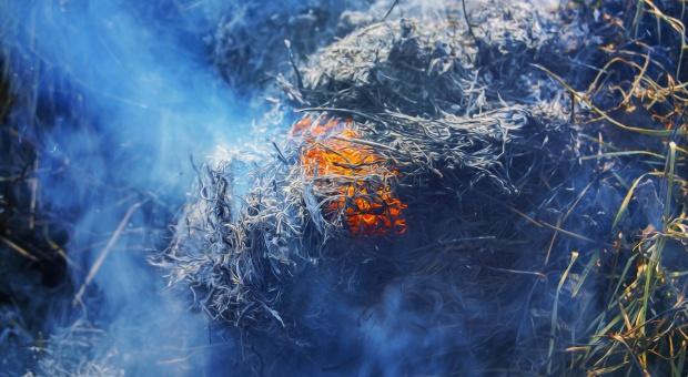 Mazowieckie: Od początku roku 1000 pożarów w lasach i 4400 pożarów traw