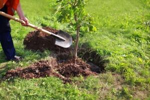 Rusza program Święto Drzewa