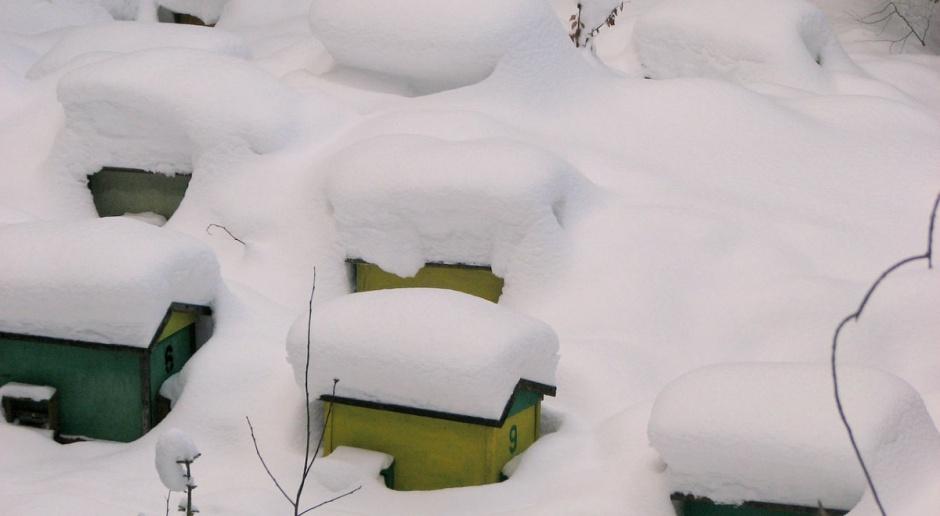 Podlasie: Leśnicy sprawdzą barcie i kłody bartne w Puszczy Augustowskiej