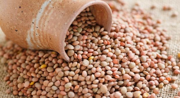 Rolnicy wracają na pola w Umbrii, by zasiać kulinarny skarb: soczewicę