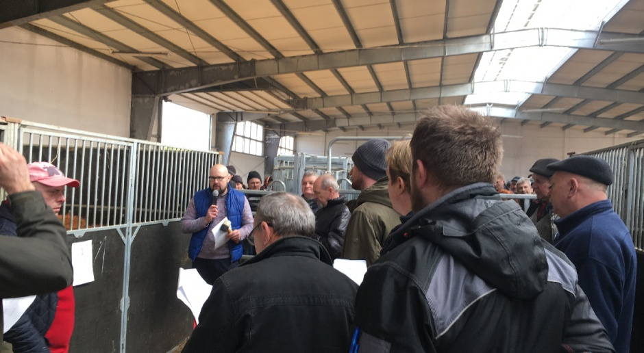 PZHiPBM: Kolejna udana aukcja bydła mięsnego