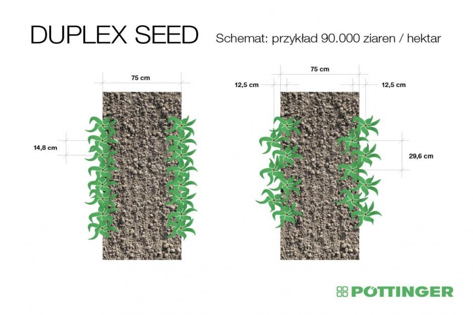Przy jednakowej obsadzie roślin, wynoszącej 90 tys. nasion na hektar, w tradycyjnym systemie siewu rośliny są znacznie bardziej zagęszczone niż w przypadku Duplex Seed