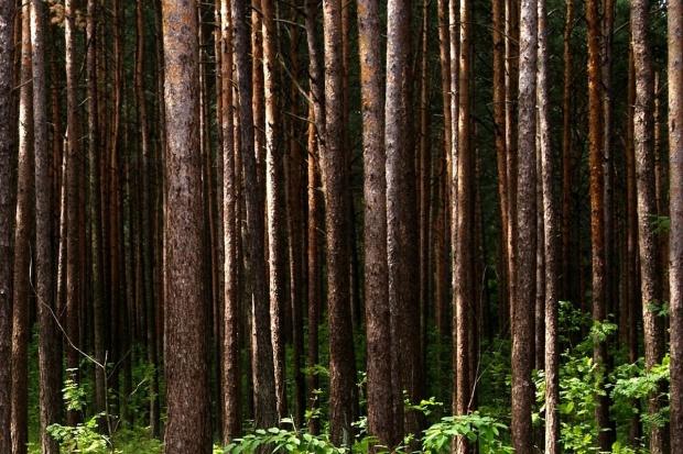 GUS: W Polsce lasów przybywa