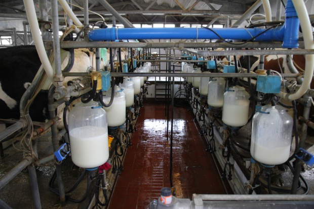 Austria: Wzrosły obroty przetwórców mleka
