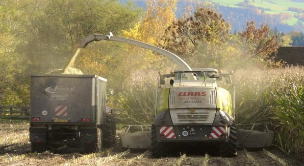 Niemcy chcą zwiększyć areał uprawy ekologicznej kukurydzy