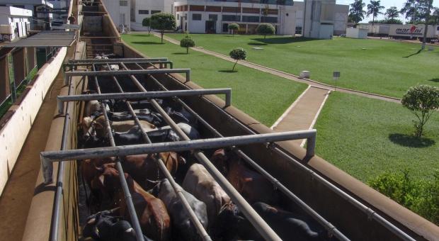 UE będzie kontrolować 100 proc. mięsa z Brazylii na granicach