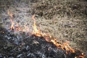 PSP: 17 tys. pożarów traw w tym roku - 1 ofiara śmiertelna, 35 rannych