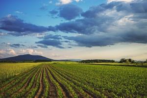 Śląskie: Pieniądze z ZIT m.in. na ochronę bioróżnorodności