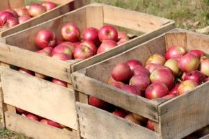 Rosja zarzuca Białorusi przemyt żywności objętej embargiem