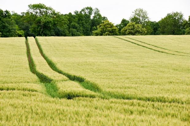 Składniki pokarmowe a odporność roślin