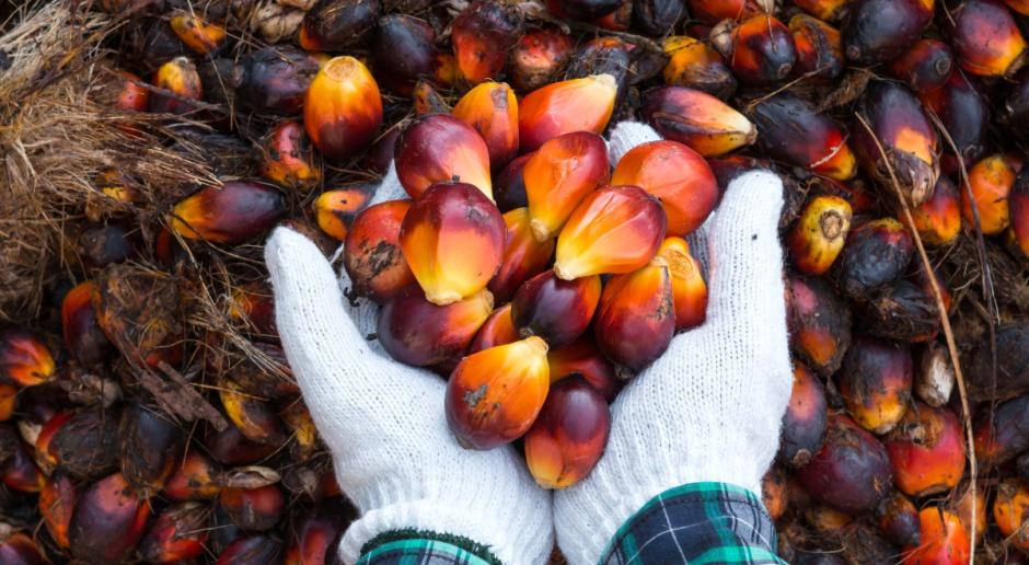 Europosłowie za ścisłą kontrolą używania oleju palmowego w biopaliwach