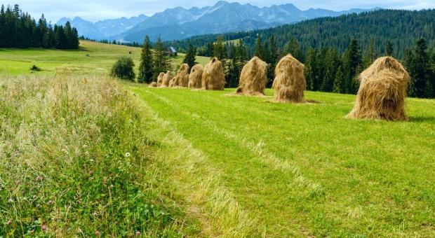Sejm: Komisja za projektem ustawy o krajowej sieci obszarów wiejskich