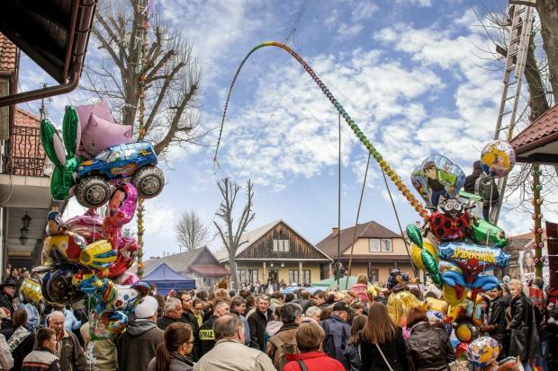Małopolskie: Prawie 29 m. mierzyła najwyższa palma w Lipnicy Murowanej