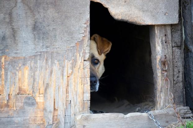 Rząd za zaostrzeniem kar za znęcanie nad zwierzętami