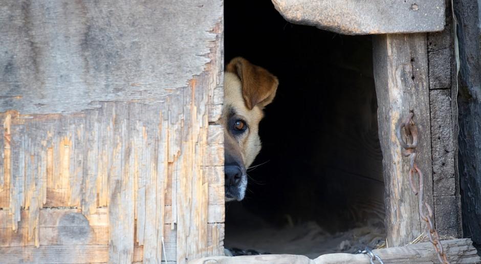 Rzeszów: Warchoł zapowiada zwiększenie środków na rzecz zwierząt bezdomnych