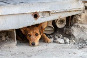 MS ws. ustawy wymierzonej przeciwko bestialskiemu traktowaniu zwierząt